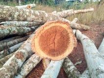 Klippt/journaler trä Royaltyfri Fotografi