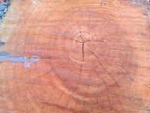 Klippt/journaler trä Royaltyfri Bild