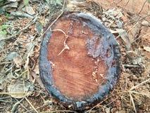 Klippt/journaler trä Arkivfoton