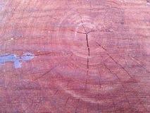 Klippt/journaler trä Royaltyfri Foto