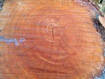Klippt/journaler trä Fotografering för Bildbyråer