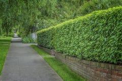 Klippt livlig gräsplan Hedgen arkivbilder