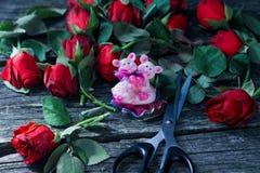 Klippt röd vissen rosor och sax med svarta handtag mörk bakgrund, sorgsenhet, fördjupning royaltyfria foton