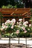 Klippt rosa träd Arkivfoton