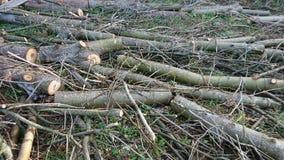 Klippt tr?skog arkivfoto
