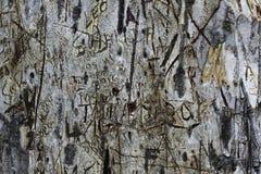 Klippta sned grafitti på skället av ett feber trädträd royaltyfri bild