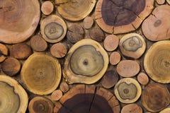Klippte naturlig ekologisk mjuk kulör brunt för runda träomålade heltäckande och gul stubbebakgrund, träd olika format för avsnit royaltyfri foto