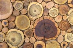 Klippte naturlig ekologisk mjuk kulör brunt för runda träomålade heltäckande och gul stubbebakgrund, träd olika format för avsnit fotografering för bildbyråer