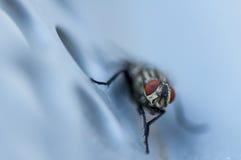 Klipsk Closeup Arkivfoto