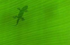 klipsk leaf Royaltyfri Foto