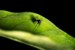 klipsk leaf Fotografering för Bildbyråer