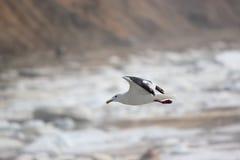 klipsk seagull Royaltyfri Fotografi