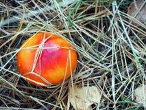 klipsk skog för agaric Arkivbilder