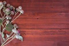 Klisbloemen Royalty-vrije Stock Afbeeldingen