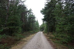 Klitplantage Husby Στοκ εικόνες με δικαίωμα ελεύθερης χρήσης