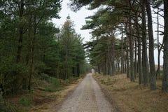 Klitplantage Husby Στοκ Φωτογραφία