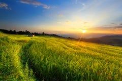 Kliver risfältet Fotografering för Bildbyråer