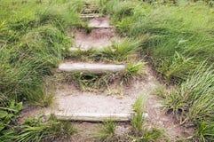 Klivit leda för slinga som är stigande till och med frodigt grönt gräs Arkivbild