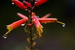 Klocka blomma med små droppar arkivfoto