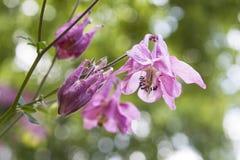 Klocka-blommor royaltyfri bild