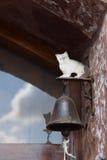 Klocka och katt Royaltyfria Foton