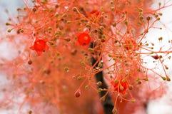 klockan blommar formad red Royaltyfri Foto