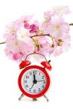klockan blommar sakura white Arkivfoto