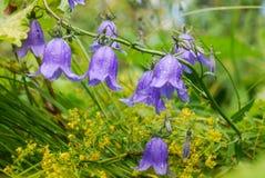 Klockor blommor Arkivbilder