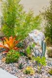 Klok ökenträdgård för suckulent vatten Arkivfoton