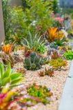 Klok ökenträdgård för suckulent vatten Arkivbild