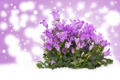 Klok-bloem vóór Bokeh Stock Foto's