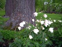 Klok - bloemen Royalty-vrije Stock Foto