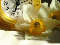 Klok met bloei van gele narcis stock afbeelding