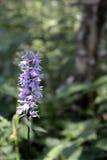 Klokbloemen in een bosopen plek Stock Afbeeldingen