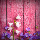 Klokbloemen op een roze achtergrond Stock Foto's