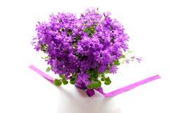 Klokje, bellflower stock fotografie