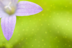 Klokje op de groene achtergrond met lichte vlekken Stock Foto