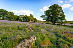 Klokjes op Dartmoor royalty-vrije stock foto's