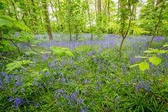 Klokjeshout in Godolphin in Cornwall Engeland het UK royalty-vrije stock afbeelding