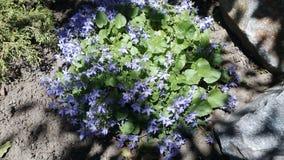 Klokken in de tuin stock afbeelding