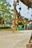 Klokken die met wensen op het grondgebied van de tempel van Grote Boedha hangen Royalty-vrije Stock Foto's
