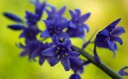 Klokvormige bloemen Royalty-vrije Stock Foto's