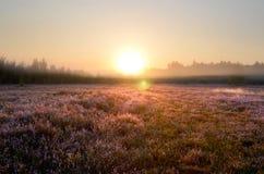 Klominskie heathland in Drawskie Lakeland (Poland) Royalty Free Stock Photos