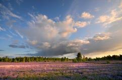 Klominskie heathland in Drawskie Lakeland (Poland) Stock Image