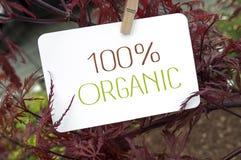 Klon z karcianą deską i 100% organicznie obrazy stock