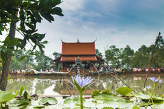 Klong 11寺庙蛇 库存照片