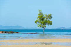 Klong Muang beach Stock Photo