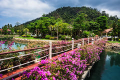 Klong Prao Resort. Cottages on the Bay in a tropical garden Stock Photos