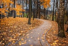 Klonowa jesień Obrazy Royalty Free