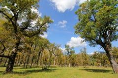 Klonowi drzewa w jesieni, Austria (Wielki Ahornboden) Obrazy Royalty Free